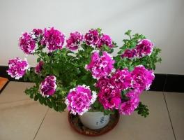 家庭养花有哪些好处