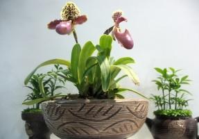 家庭养花需注意些什么