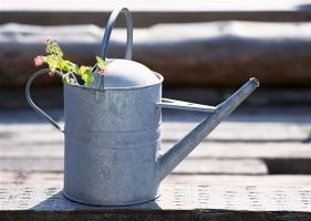 浇水过多或过少对花卉有哪些危害