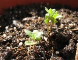 盆花怎样进行合理施肥