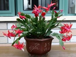 盆花冬季管理有哪些要点