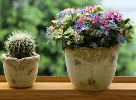 阳台盆花应怎样度夏