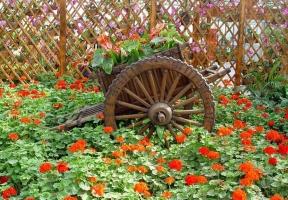 养花为什么不能使用生肥