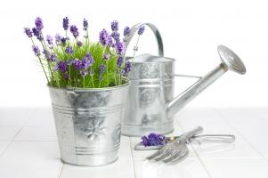 盆花在什么时间浇水最好