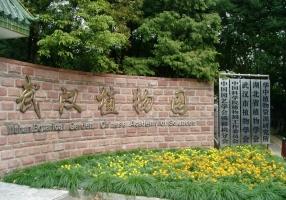 武汉植物园怎么走