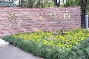 武汉植物园在哪