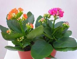冬天开的花有哪些