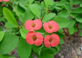 冬天的花:有代表性的冬季花儿 附图