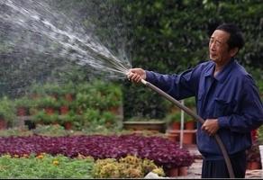 自来水浇花好吗:自来水中的氯气你说好吗