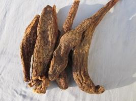 肉苁蓉的功效与作用及食用方法:腹泻者短时间禁服