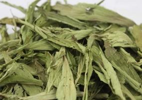 甜叶菊的功效与作用:不可大量长期饮用