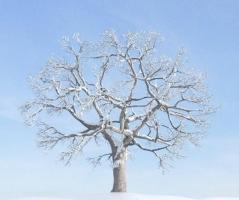 植物是怎么过冬的-植物科普