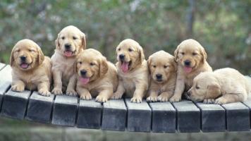 对宠物有毒的赢8娱乐手机版毒性分析和处理办法