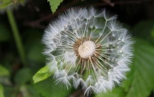 植物种子的传播方式