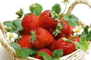 草莓叶子发黄:四种原因和解决方法