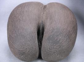 植物界最大的种子:复椰子海椰子