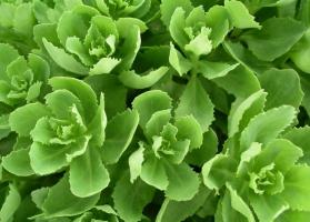 绿色植物的作用:与你与我息息相关