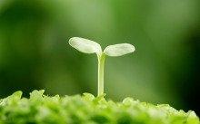 植物的特点:部分科属植物特点介绍
