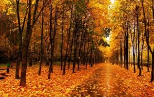 秋天树叶为什么变黄:秋天树叶叶绿素被分解而变黄