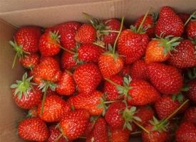 草莓怎么保存:洗干净沥去水放在保鲜盒冷冻