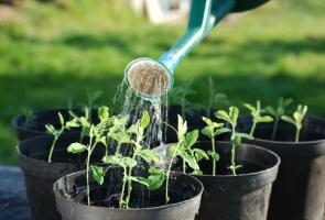 植物对水的吸收及利用-植物科普