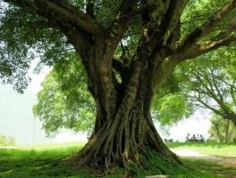 榕树的作文:关于榕树的作文及相关短文