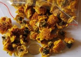金花茶多少钱一斤:金花茶的干货与盆栽的价格介绍