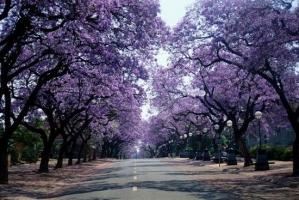 紫薇树的价格:紫薇树的价格及相关的扩展知识讲解