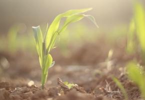 温度对植物生长有什么影响:温度对植物生长的影响是综合的
