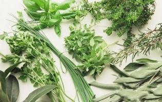 常见的香草品种:常见香草的图文介绍