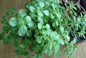 种植香草植物的5个小妙招