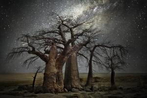 世界上最古老的10棵树:知道三种算你牛!