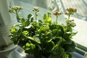如何清洗花卉植物的叶片:注意时间和方法