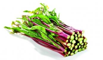 红菜苔的种植方法:注意种植时间和肥水管理