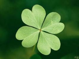幸运草怎么种?幸运草的种植方法