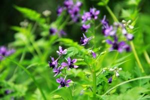 还亮草的栽培方法及注意事项:种子繁殖或扦插繁殖,
