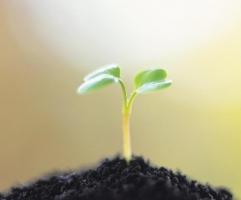 土壤增加酸性的方法:根据土壤酸碱值具体操作