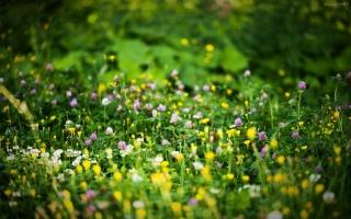 家庭养花常见问题:养花知识