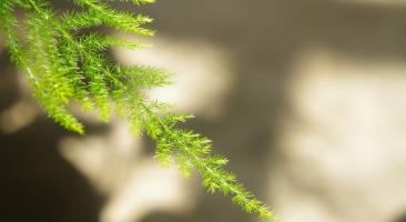 12种室内观叶植物常见病虫害防治:好养易活也有例外