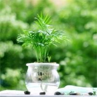 水培植物的越冬技巧:光照適宜,清潔增溫