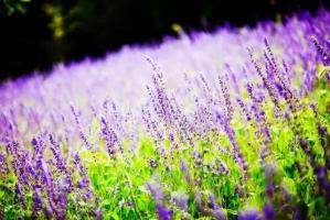 常见养花术语66例:水,培养土/介质,肥料,养护
