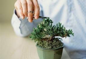 冬季植物剪枝有什么好处:防病虫害,保存养分