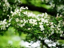 室內盆栽花卉如何選購:住所朝向環境,個人喜好