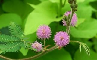 18种不宜在室内摆放的植物