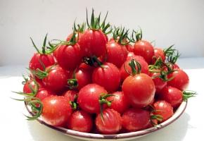 小番茄是转基因的吗:不是,它是通过杂交育种优选出来的品种