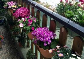 阳台怎样养花:忌养黄、红色植物盆栽