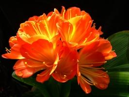 养花技巧 如何让花不黄叶不烂根