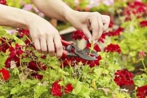 秋季養花只要做到這八點,明年開爆盆