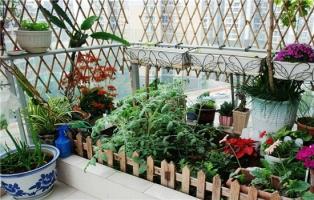 推荐10种适合阳台种植的花卉