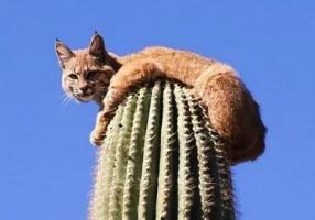 仙人掌上的猫